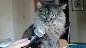 3 poderosas técnicas para vencer el miedo al hablar en público